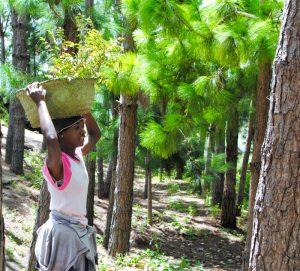 Baumpflanzaktion mit Kindern und Eltern aus unserem Schulprojekt in Madagaskar